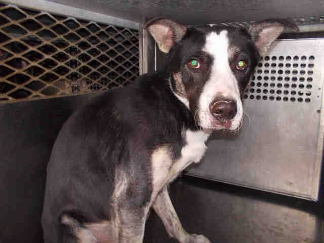 Garland TX - Please Adopt or foster to save. Consider ...