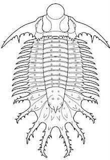 Terataspis Trilobite Fossils Prehistoric