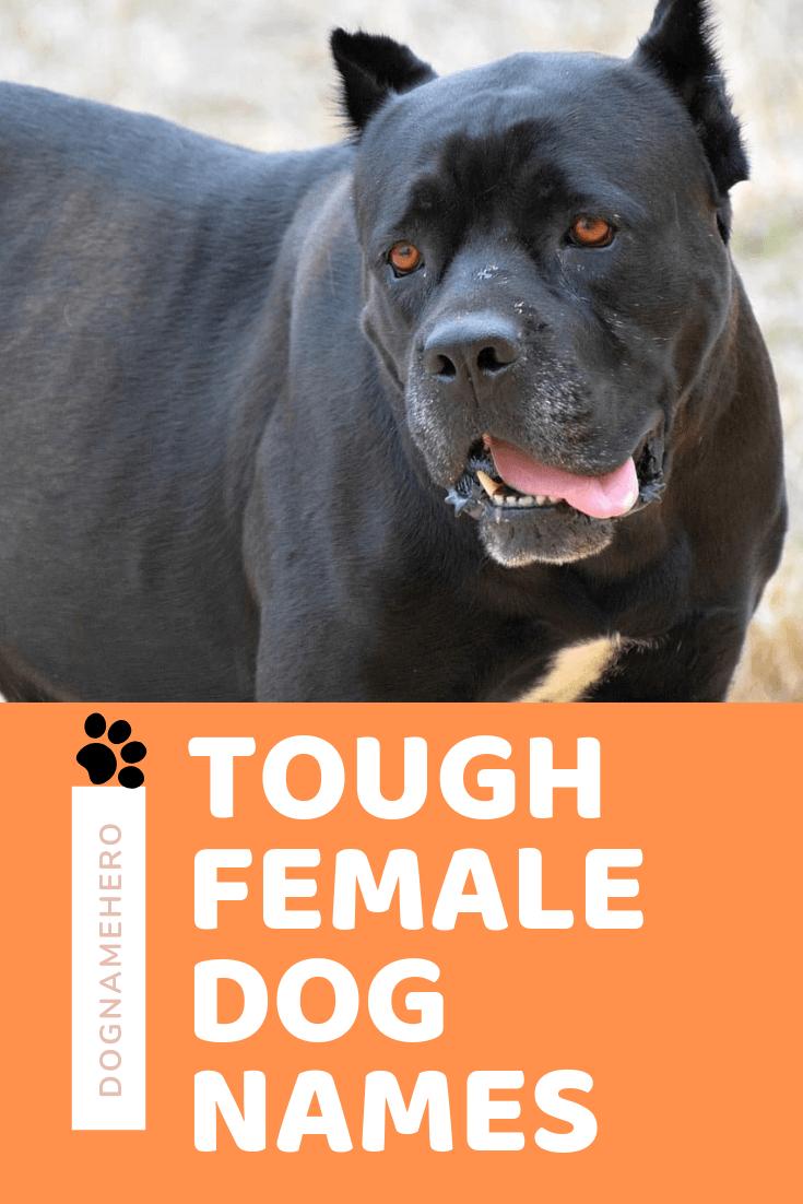 Tough Dog Names 70 Badass Dog Names Dog Name Hero Dog Names Female Dog Names Girl Dog Names Unique
