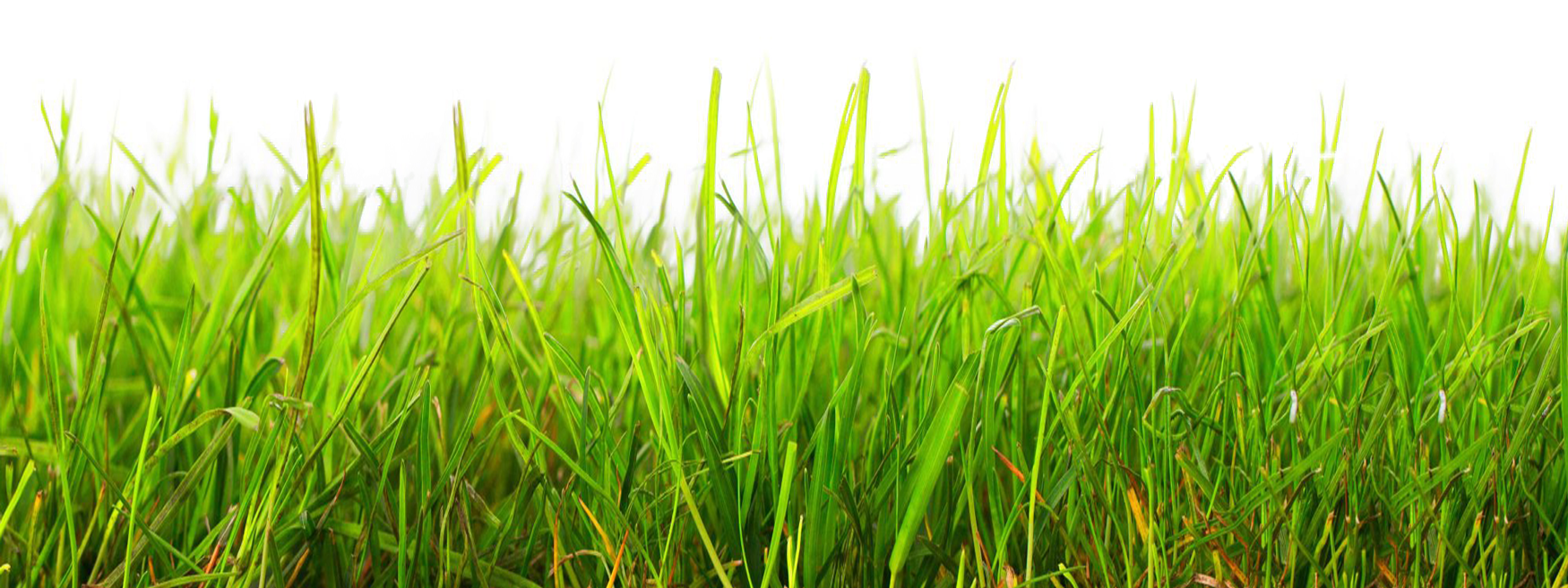 Grass Png Image Grass Grass Drawing Image
