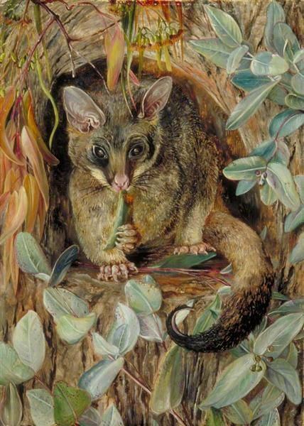 Possum up a Gum Tree, 1880 by Marianne North. Naturalism. animal painting