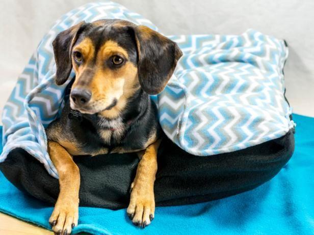 Create a Cozy DIY Pet Bed | Hunde, Haustiere und Deckchen