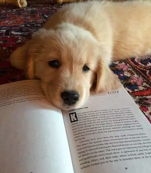 Do Not Disturb He Is Studying Just Have A Close Look On The Book