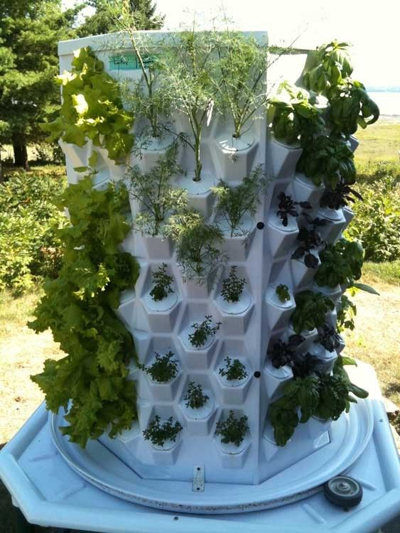 This is the Green Diamond Aeroponic tower, a hydroponic