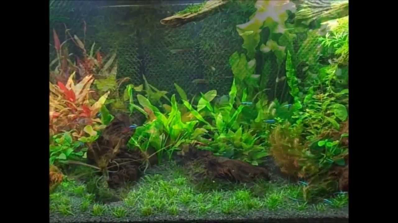 Once the tank is established...christmas moss wall - building a wall | Planted aquarium, Easy ...