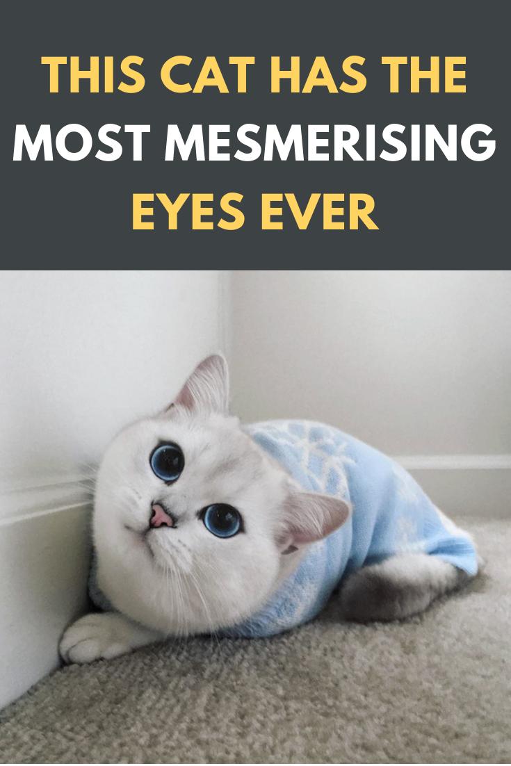 This Cat Has The Most Mesmerising Eyes Ever Cats Cat Catsofinstagram Catstagram Pets Catlover Pet Instacat Cute Love Animals Kitten Cats Cat Lovers