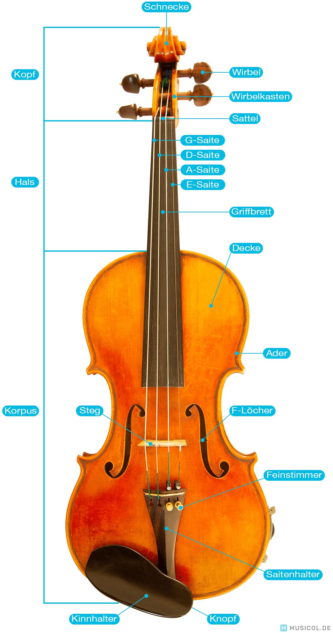 Geige Aufbau