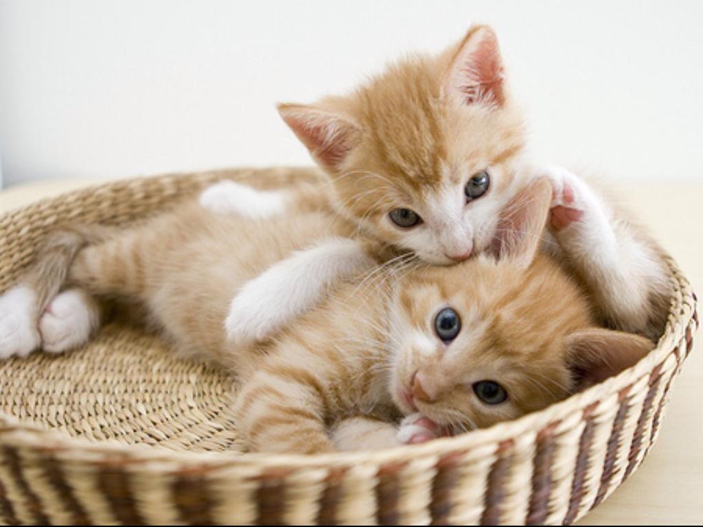 the basket.