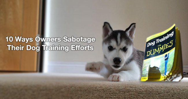 10 Ways Owners Sabotage Their Dog Training Efforts Dog Training
