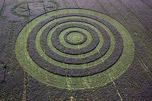 This crop circle appeared in a field of borrage, which has a blue flower, creating and amazing contrast. This one was appeared in Collington Bourne, Wiltshire, England.