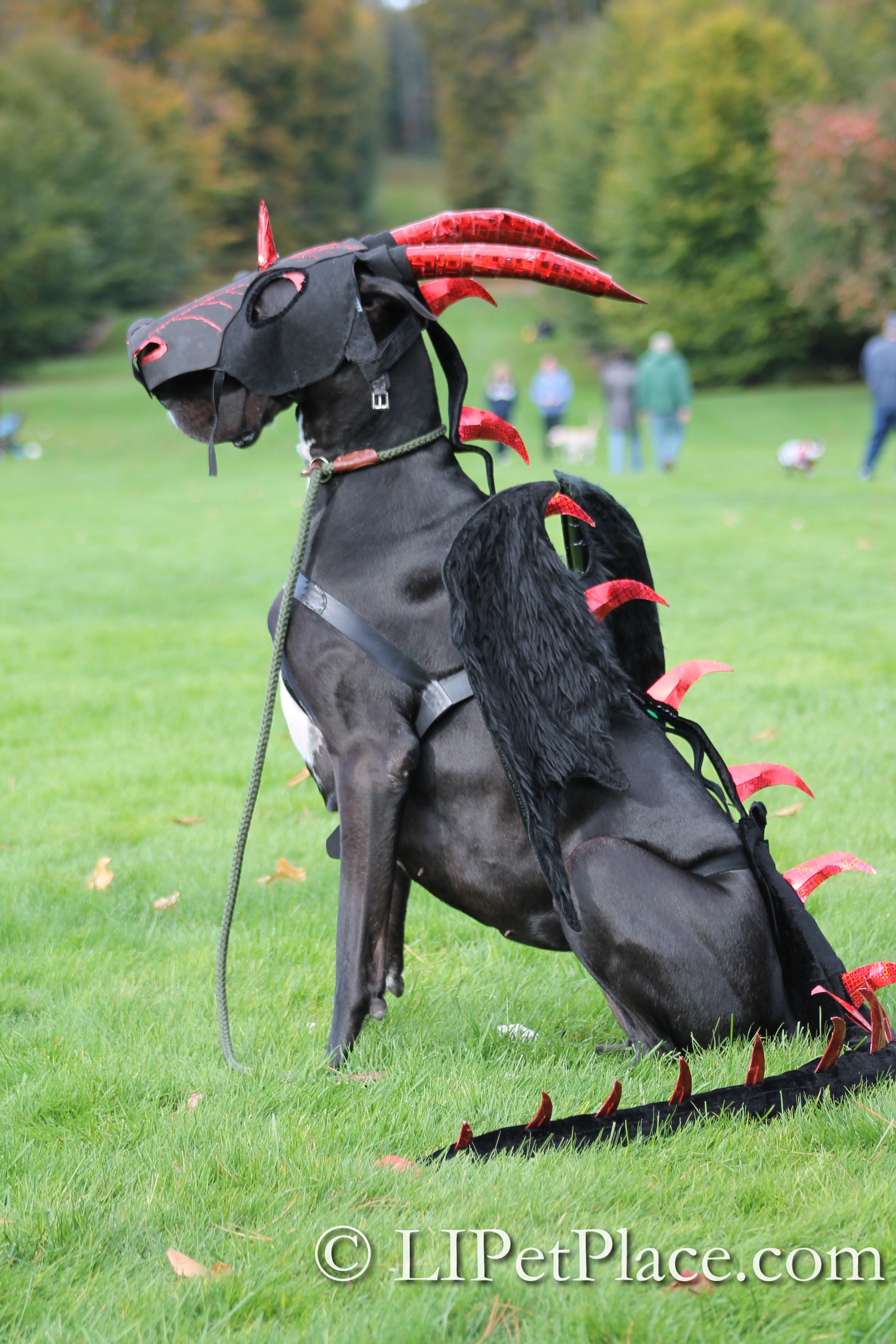 Coolest Pet Costume At A Recent Halloween Event Bella The Dragon
