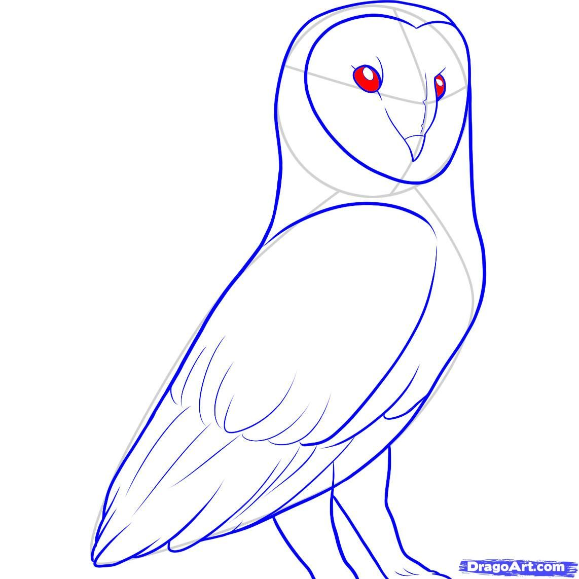 How to draw a barn owl step 10 arts in medicine for Steps to draw an owl