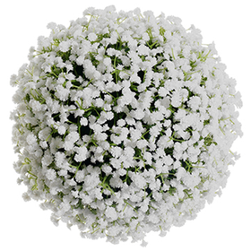 10 Artificial Plastic Gypsophila Baby S Breath Kissing Flower Ball White Pack Of 2 Fzb320 Wh Kissing Ball Flower Ball Babys Breath