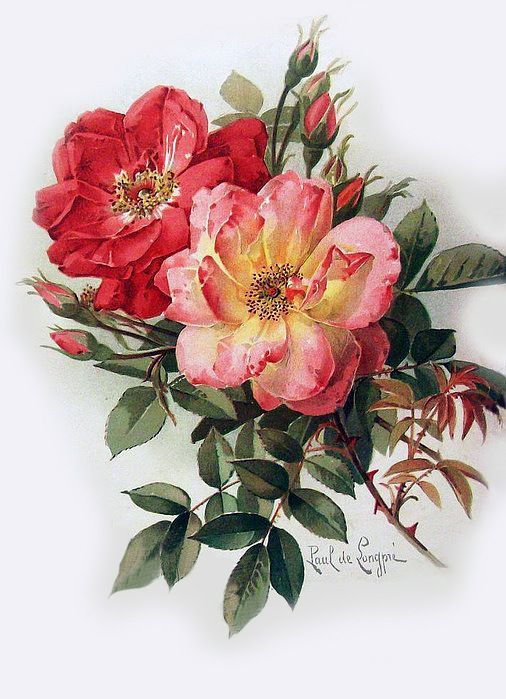 Art Print of Vintage Art Wild Roses by Paul de Longpre