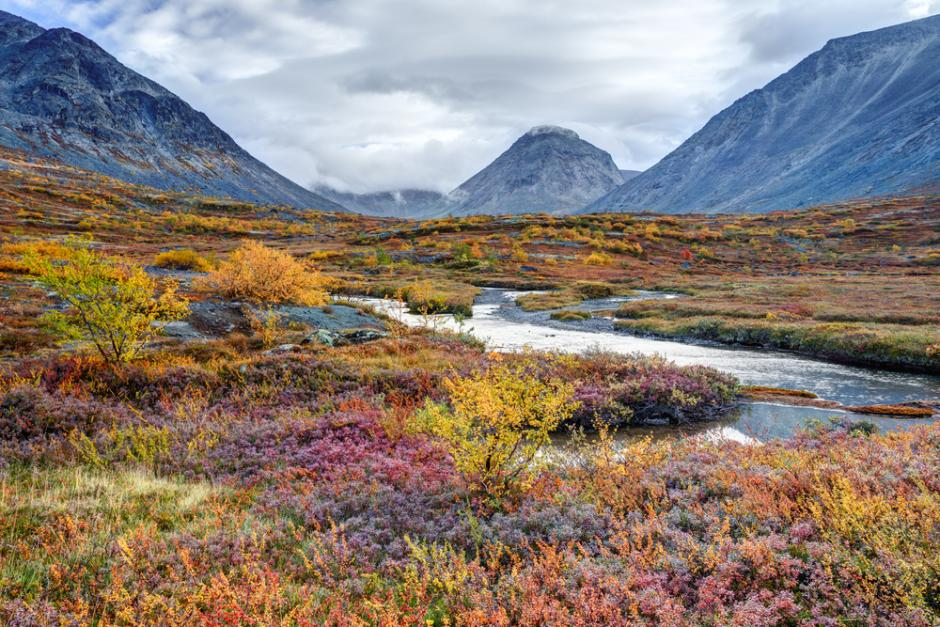 Most areas of the Arctic are covered by tundra, but the