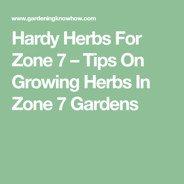 Zone 7 Herb Plants: Choosing Herbs For Zone 7 Gardens