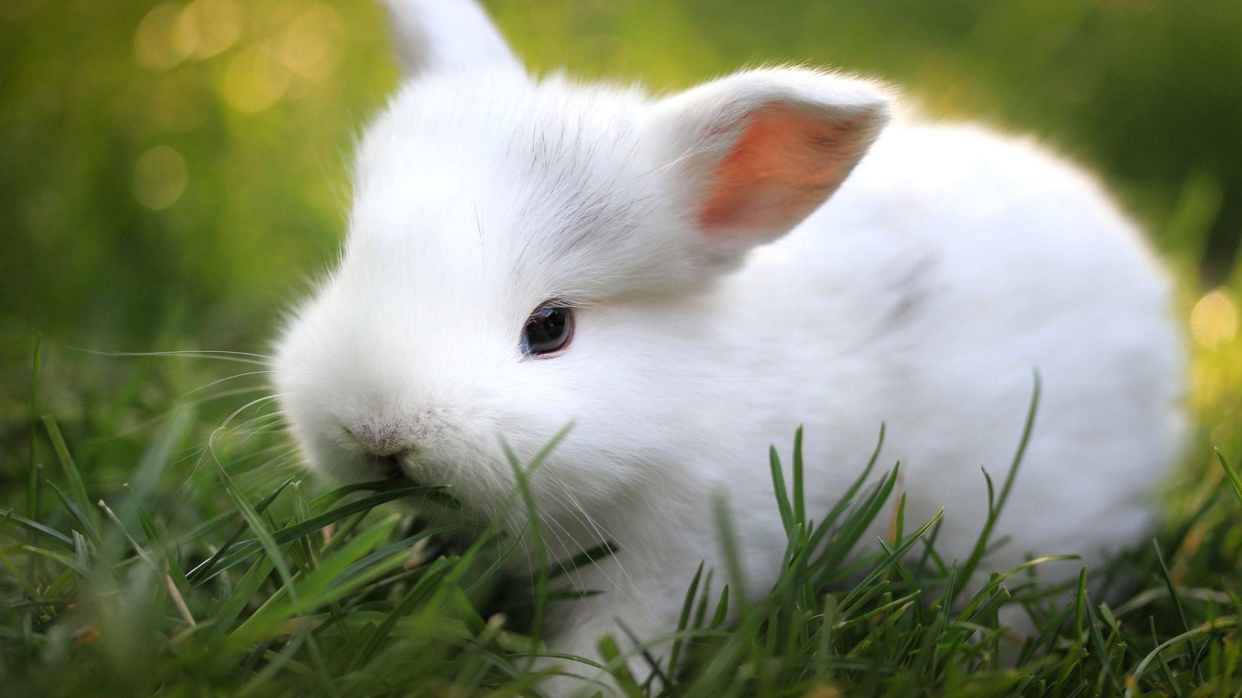 Baby Bunny Wallpaper Rabbit Wallpaper Cute Bunny Pictures Animals