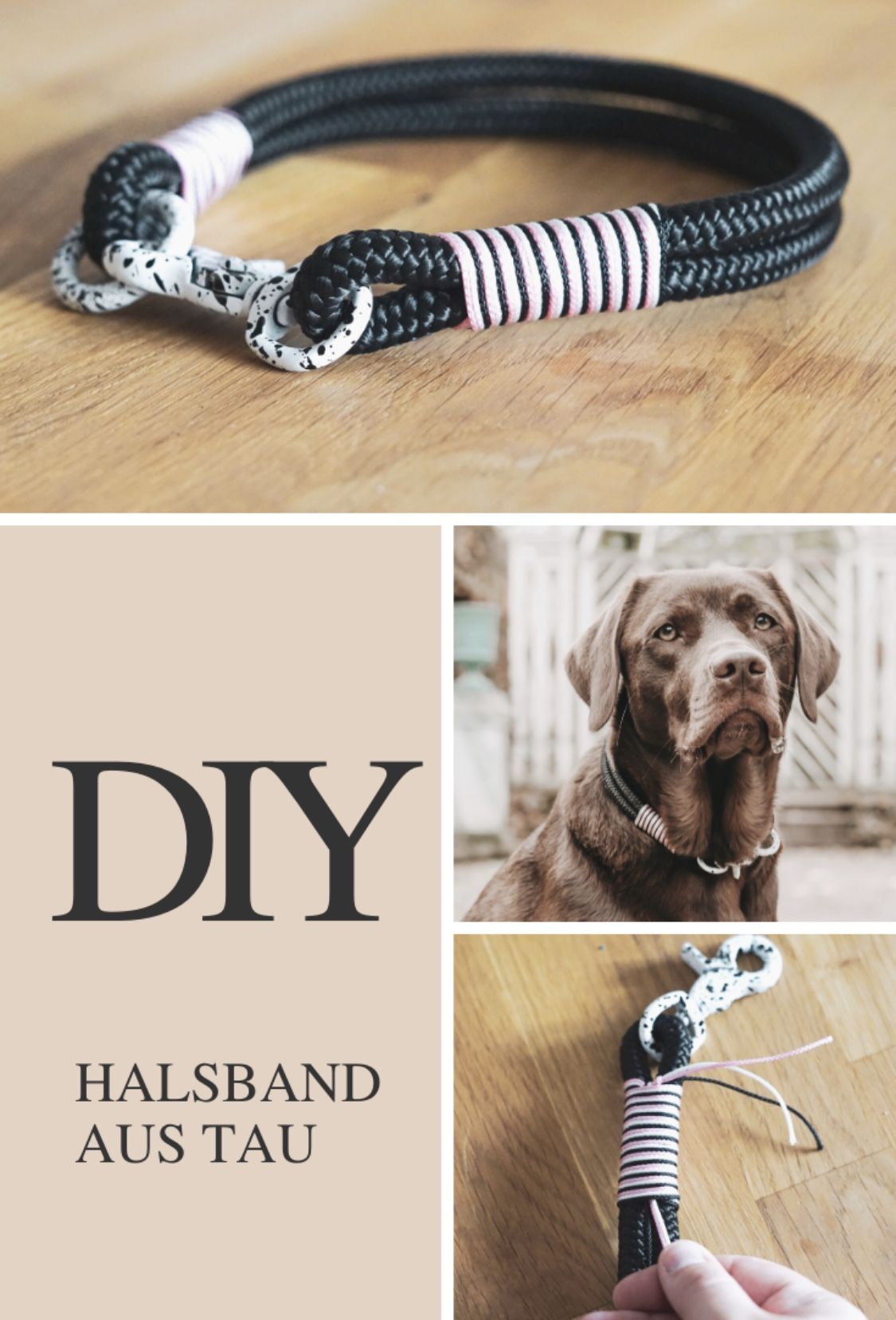 Photo of DIY Halsband aus Tau | miDoggy Community