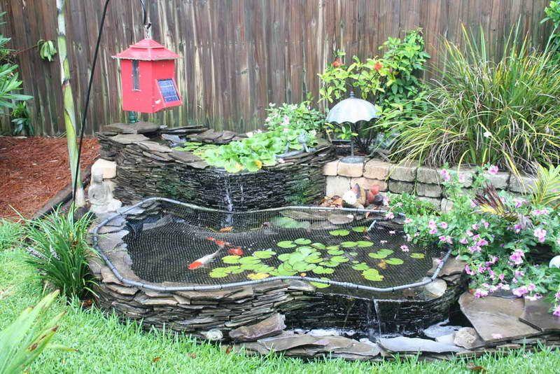 Ornamental Fish Ponds Google Search Ponds Backyard Koi Pond Design Pond Decorations
