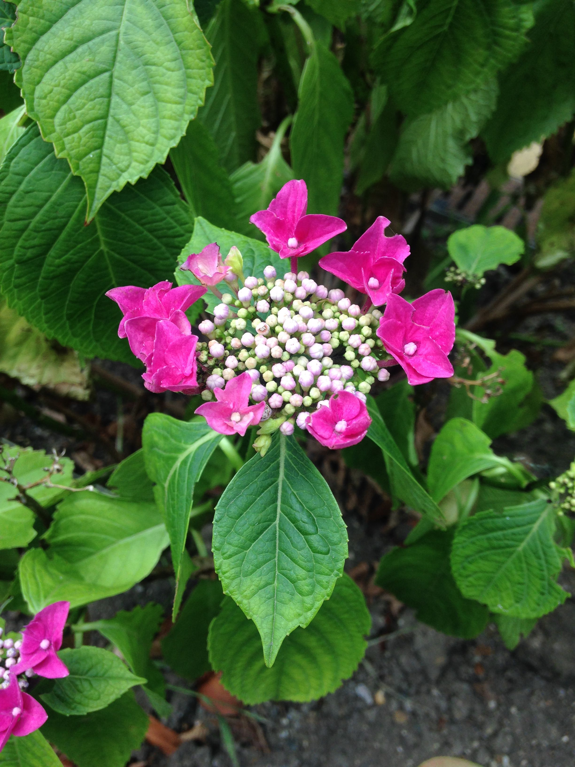 Shoreditch Gardens: Gardens Of The World, Garden, Plants