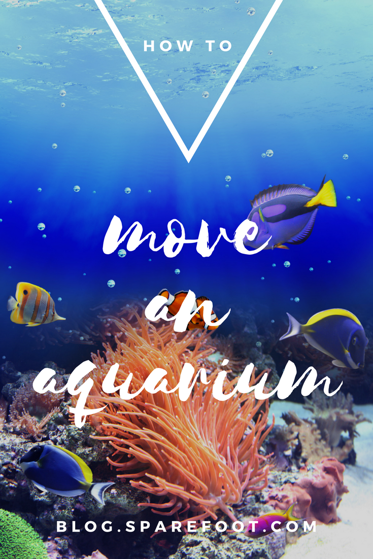 How To Move An Aquarium To Your New Place The Sparefoot Blog Moving Day Aquarium Moving