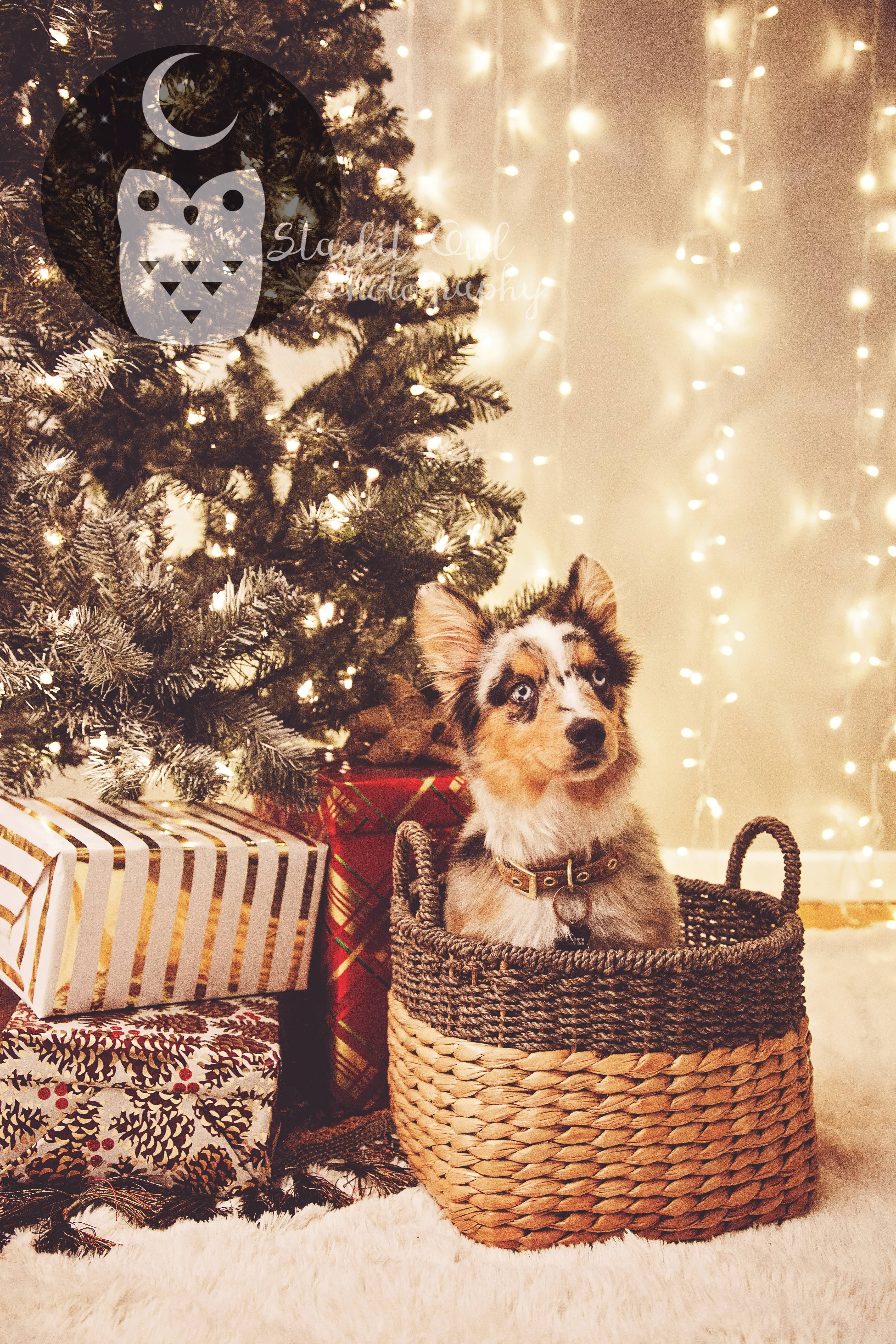 My Puppy S First Christmas Picture Http Ift Tt 2ganwsv Dog Christmas Photos Christmas Pet Photos Dog Christmas Pictures