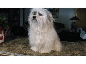 Sammy A Lost Dog Is Missing In West Branch Mi 48661 12 31 2014