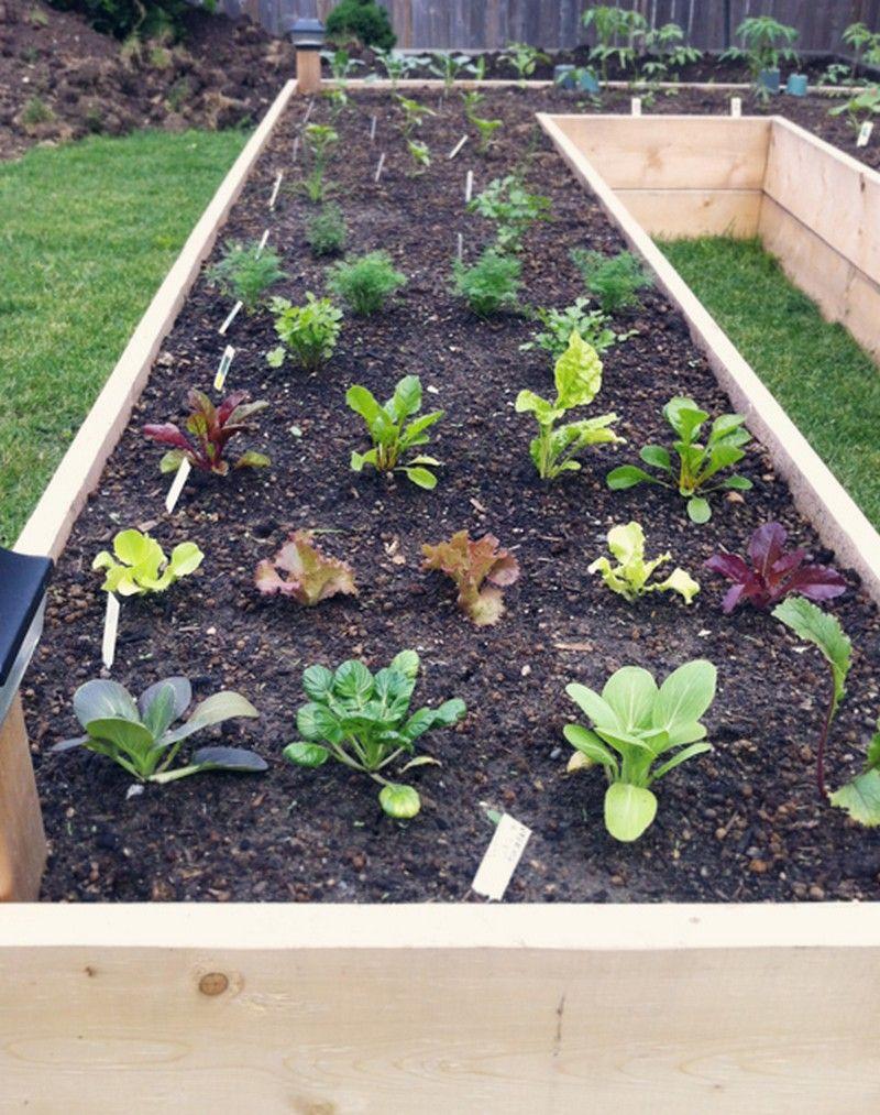 u shape garden design fascinating raised garden designs | garden