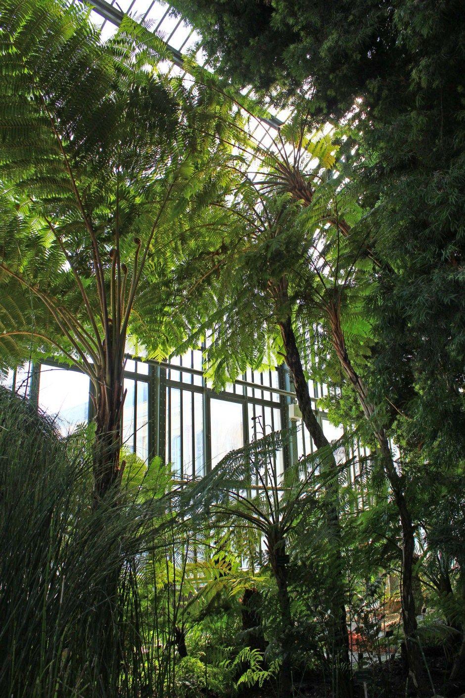 Sous les tropiques des Grandes Serres, Jardin des Plantes ...