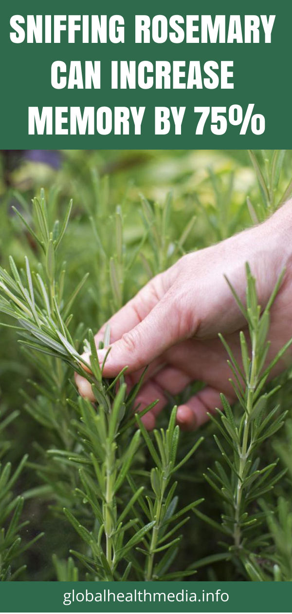 Sniffing Rosemary Can Increase Memory By 75% - Global Health Media