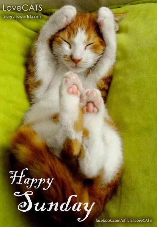 Happy Sunday! | CATS are PURR-FECT | Cats, Cute animals ...