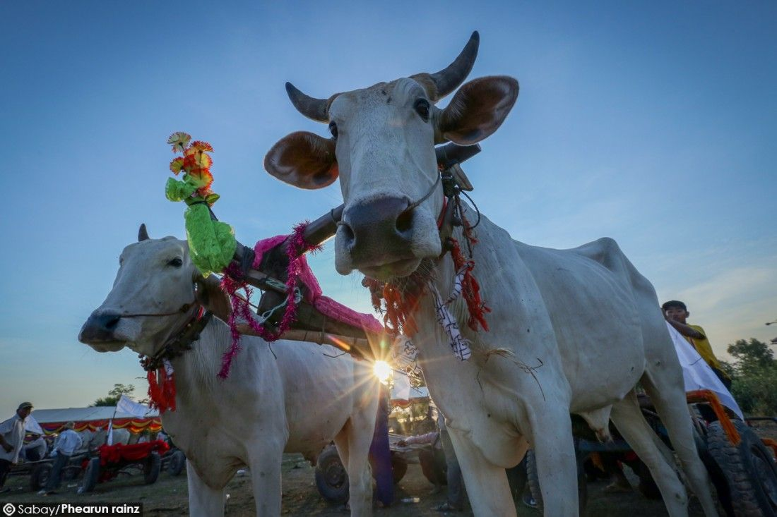 Khmer new year in Cambodia, wagons Khmer new year