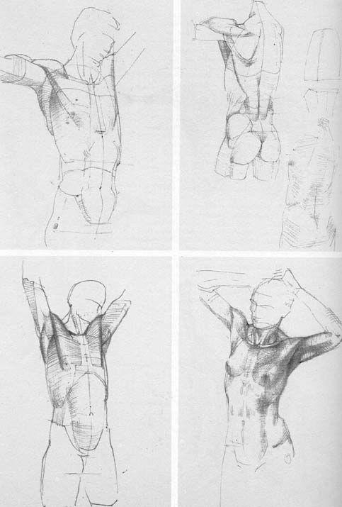 A Wonderful Book Die Gestalt Des Menschen By Gottfried Bammes
