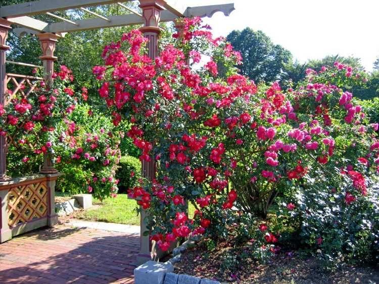Gartengestaltung mit Rosen Tipps für einen schönen Rosengarten Garten Rosen beet  ~ 19174051_Gartengestaltung Ideen Bilder Rosen