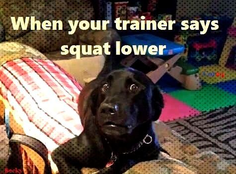 gym humor squats squat lower trainer workout funny - gym humor squats squat lower trainer workout