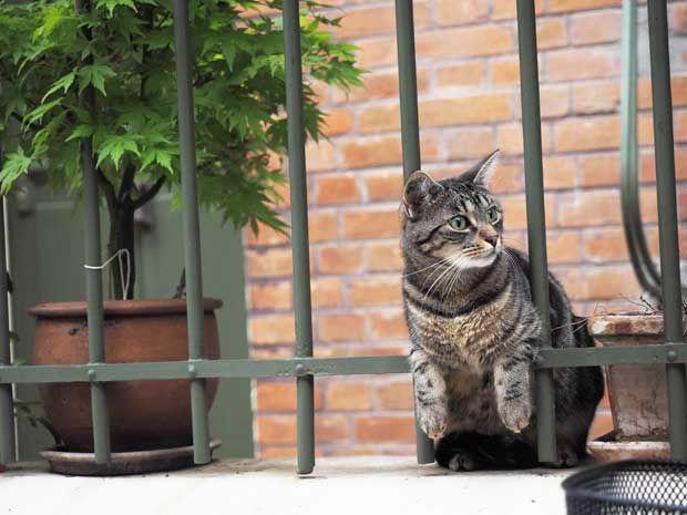 C 撮影 岩合光昭 世界ネコ歩き 猫 かわいい猫