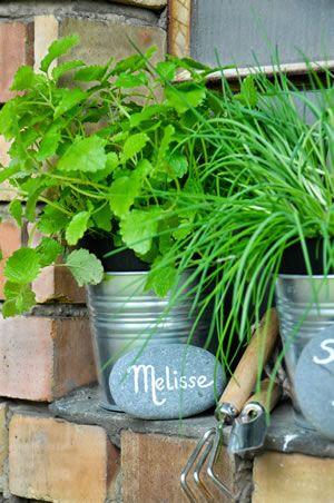 Zitronenmelisse, Melissa officinalis - Anbau und Pflege Garten - pflanzen topfen kubeln terrasse