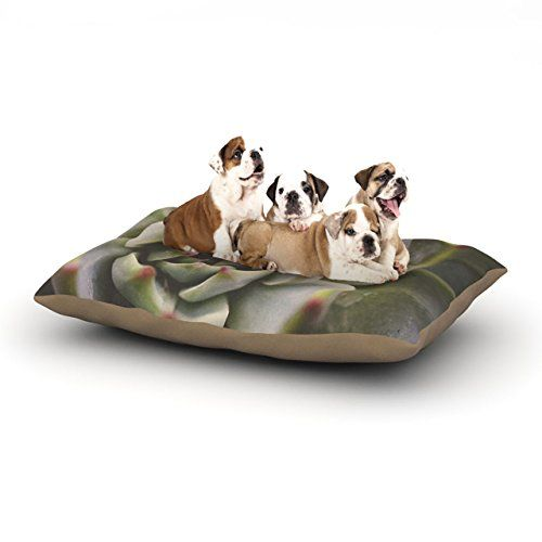 Kess InHouse Debbra Obertanec Desert Succulent Fleece Dog Bed 30 by 40Inch Green *** You can find more details by visiting the image link.