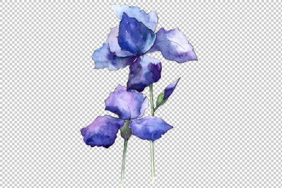 Watercolor Blue Irises Flowers Png Set Graphic By Mystocks Creative Fabrica In 2020 Blue Iris Flowers Iris Flowers Botanical Flowers