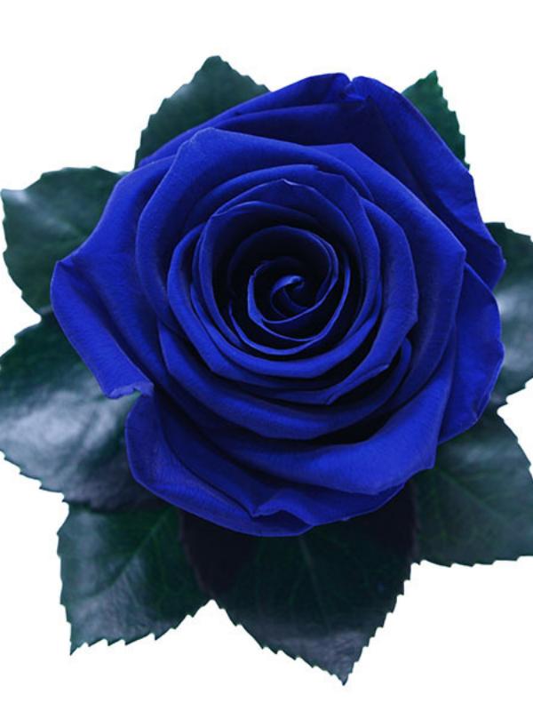 The Only 1 Royal Blue Preserved Long Stem Rose Bouquet Blue Flower Arrangements Royal Blue Flowers Beautiful Rose Flowers