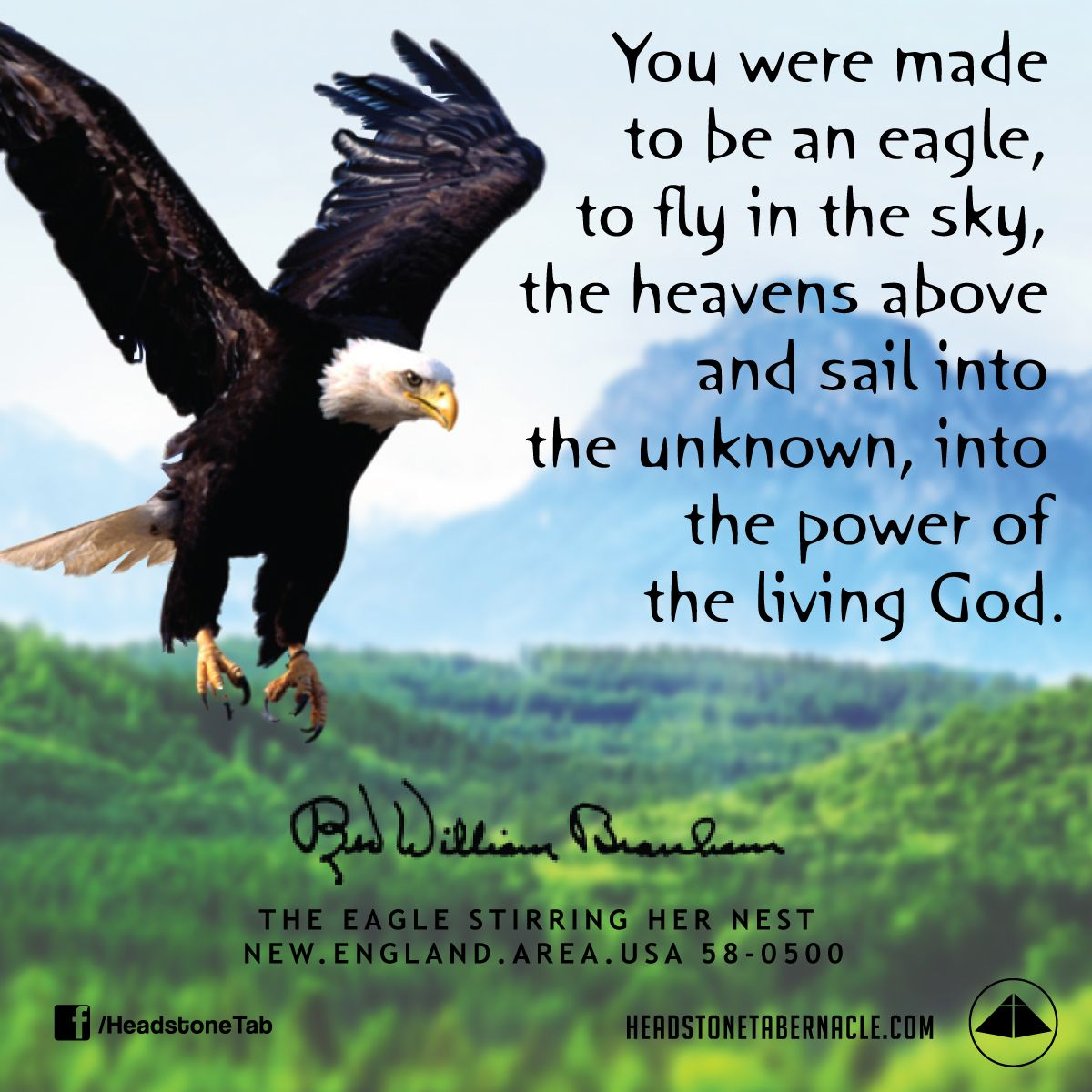 You Were Made To Be An Eagle To Fly In The Sky The Heavens Above And Sail Into The Unknown Into The Power Of The Living Eagles Quotes Eagles Prophet Quotes