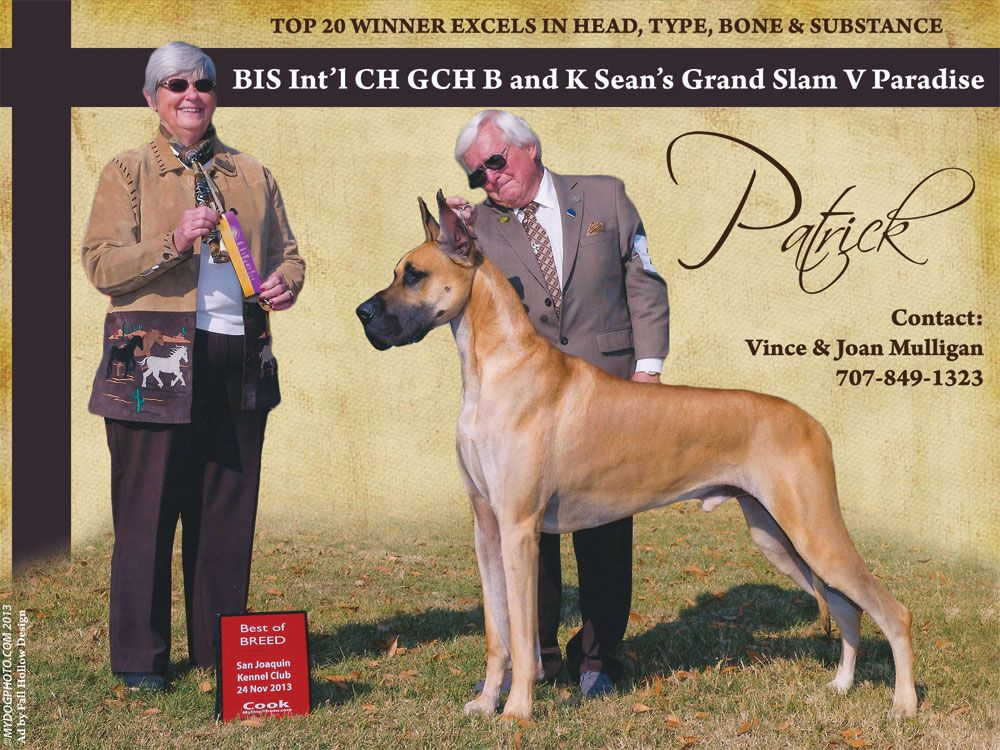 Home Back to Stud Galle Great dane, Animal quotes