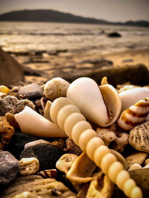 Someone Treasures The Ocean <3