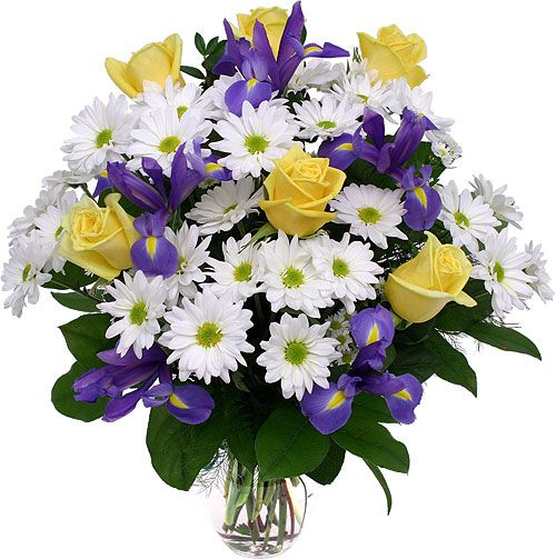 Google image result for httpcanadaflowersimagesflowers captivating arrangement of six long stemmed yellow roses in a bed of pure white daisies and dramatic purple irises mightylinksfo Gallery