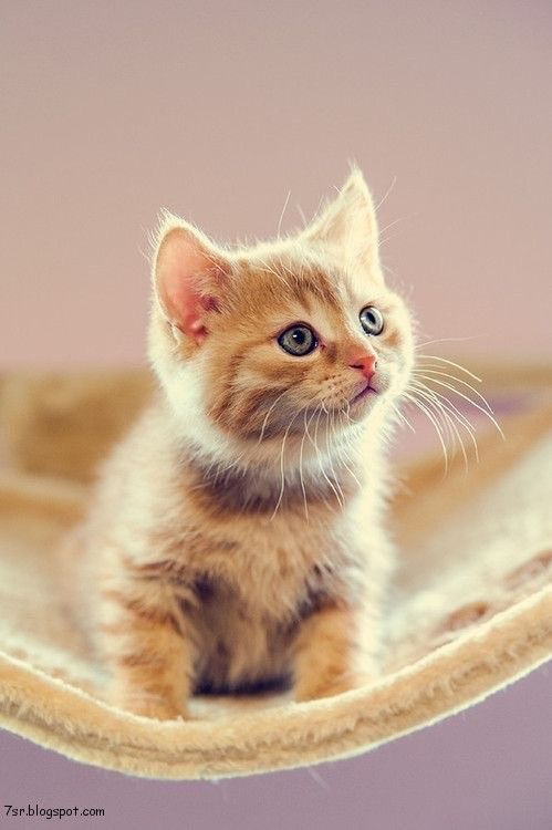 أجمل صور قطط Kittens Cutest Cats Cute Cats