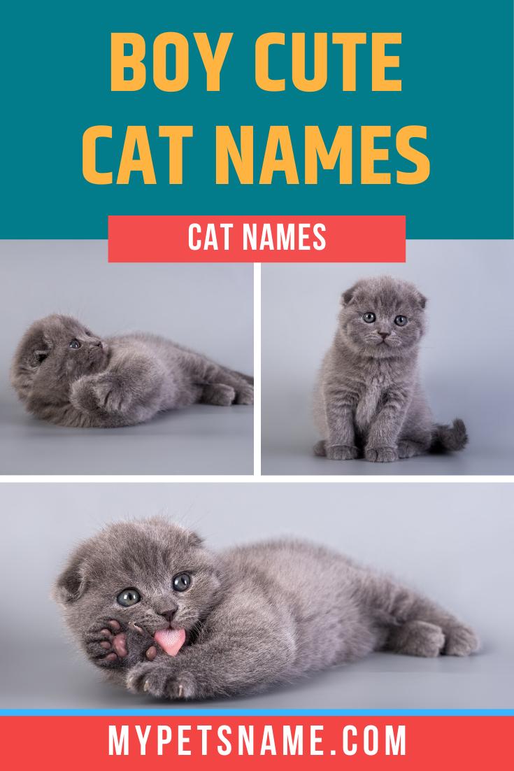 Boy Cute Cat Names In 2020 Boy Cat Names Cute Cat Names Cat Names