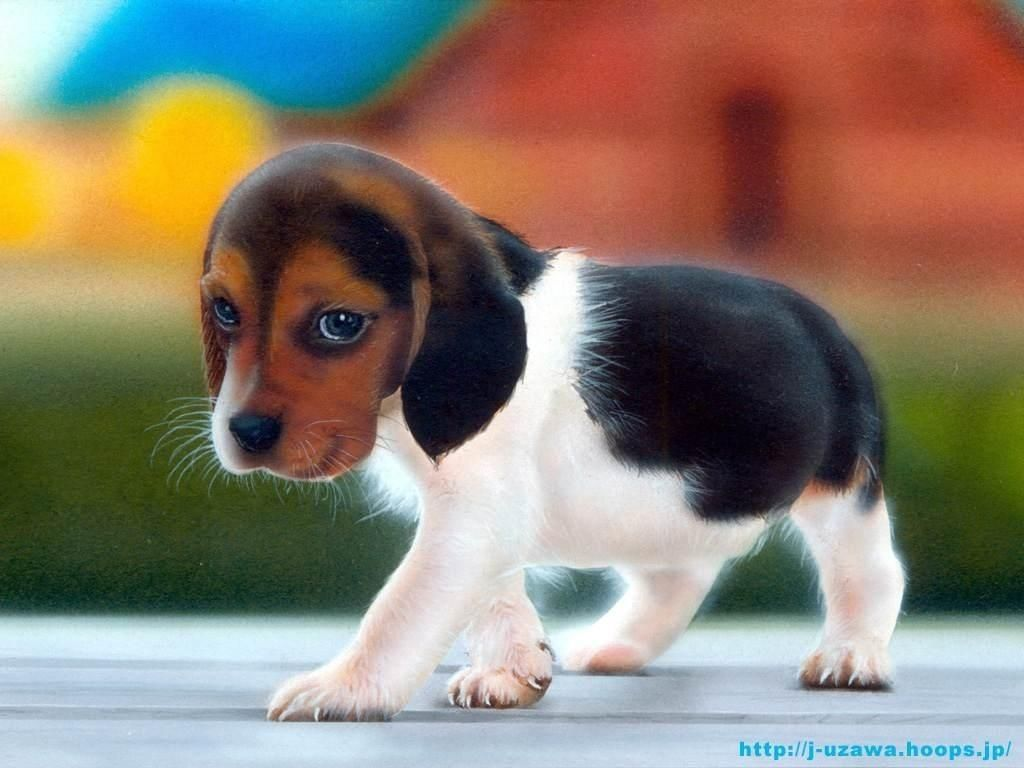 8 Puppy Tail Wags And What They Mean For You Cute Animal