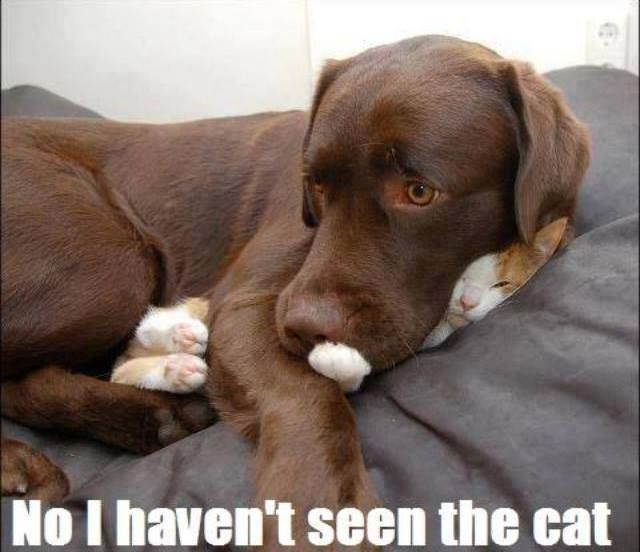 funny dog pictures with captions no i have not seen the cat