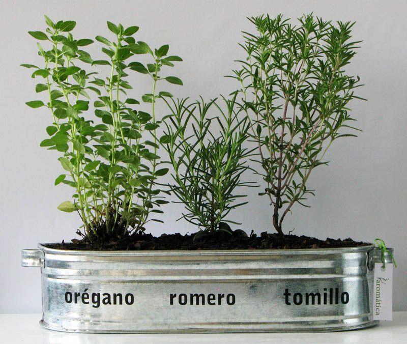 Las 10 plantas arom ticas m s resistentes y decorativas - Plantas aromaticas jardin ...