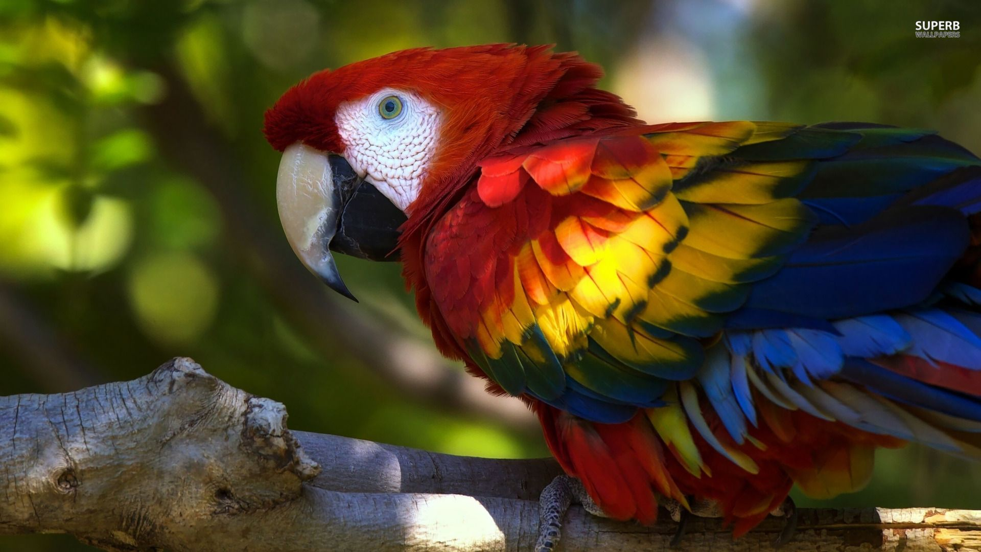 Scarlet Macaw Google Search Parrot Wallpaper Parrot Macaw Parrot